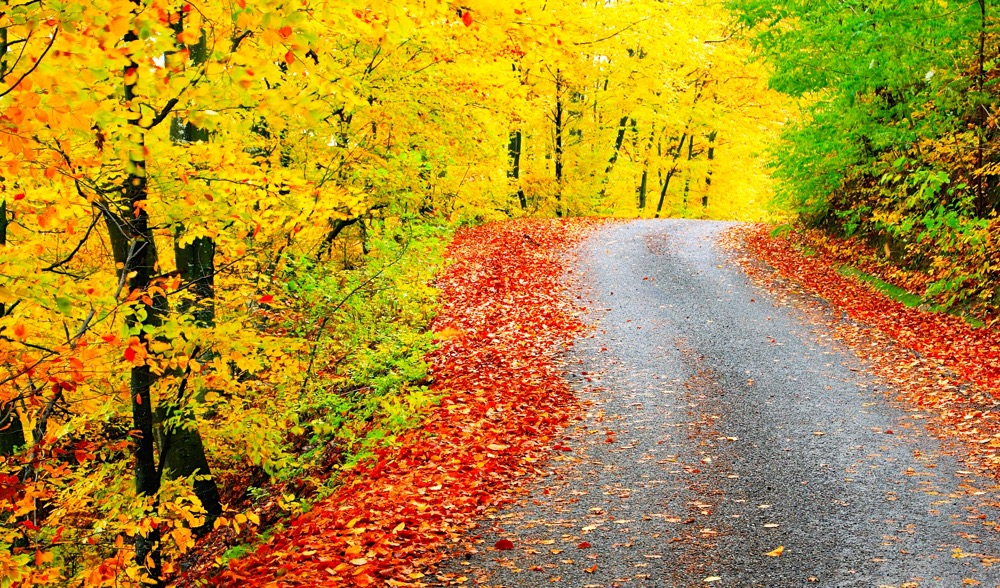 Running Autumn The Best Season For Running Endurance