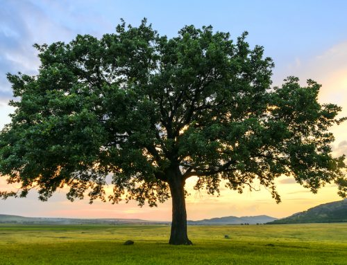 Tales from the Trail: The Tree